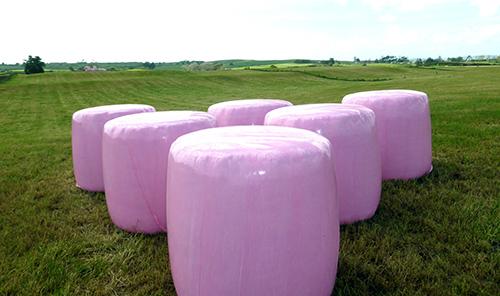 rosa-trioplast