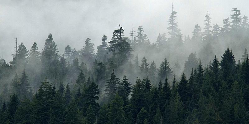 skog_1
